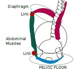abdominal cylinder
