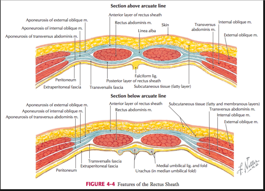 Pregnancy Pain After C Section C Section Cesarean Section